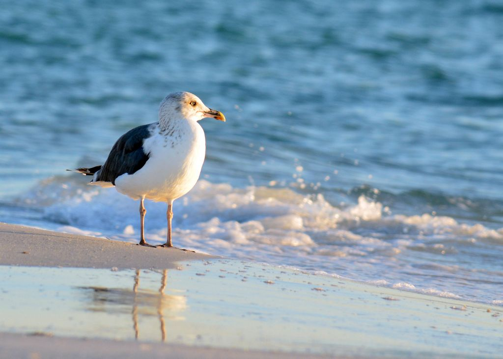 Shore Birds are a Joy to Watch - Just Don't Feed Them
