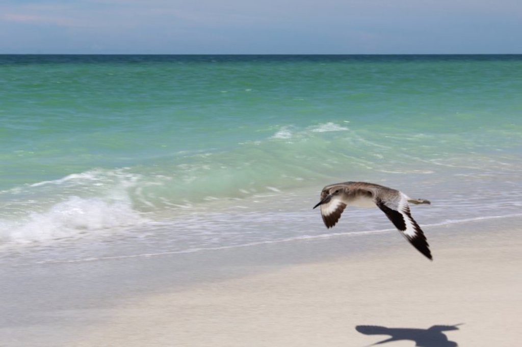 Spend Your Days Enjoying the Gulf Coast Sea Birds.