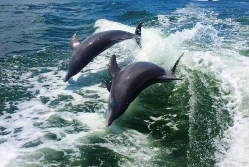 Take a Dolphin Tour or Watch Them From the Shore