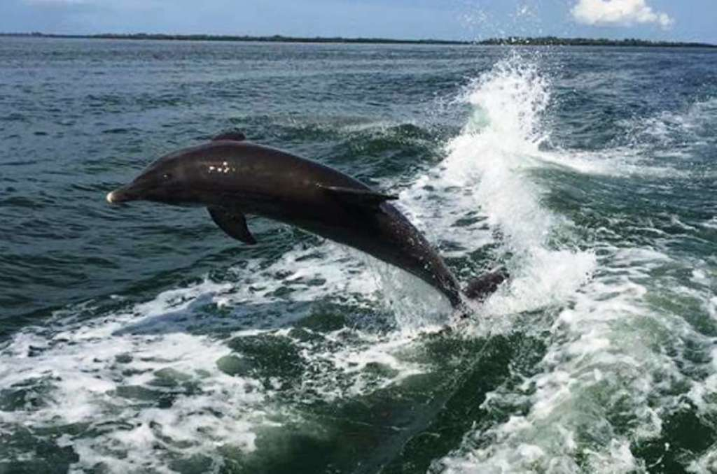 Book a Dolphin Tour