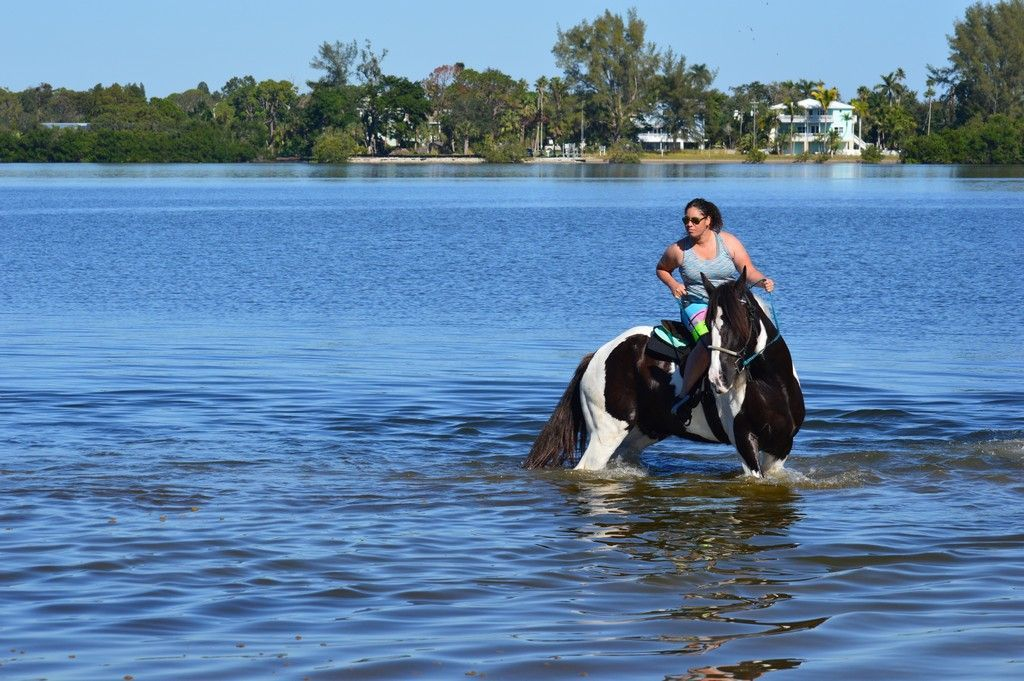 Horse Surfing on the Manatee Causeway.