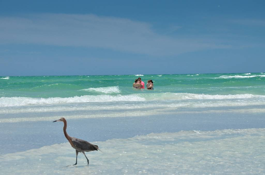 Enjoy the Award-Winning Siesta Key Beaches